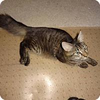 Adopt A Pet :: Handsome - Colmar, PA