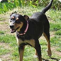 Adopt A Pet :: Izzy - Tumwater, WA