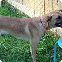 Adopt A Pet :: Macon - Delaware, OH