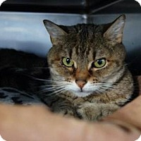 Adopt A Pet :: August - New Milford, CT