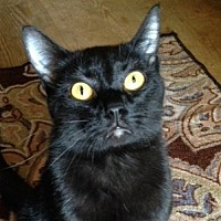 Adopt A Pet :: Slider - Germantown, MD