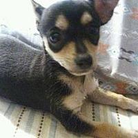 Adopt A Pet :: Leroy - Scottsdale, AZ
