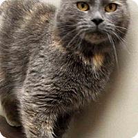 Adopt A Pet :: Layla - Oswego, IL