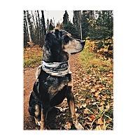 Adopt A Pet :: Luna*ADOPTED!* - Chicago, IL