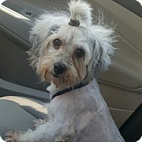 Adopt A Pet :: Penny Lane - Maryville, MO