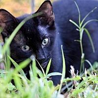 Adopt A Pet :: 70980 Austin - Wetumpka, AL