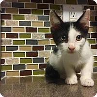 Adopt A Pet :: Booker - Hampton, VA