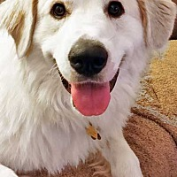Adopt A Pet :: Gracie in MD - new! - Beacon, NY