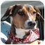 Photo 2 - Beagle/Dachshund Mix Dog for adoption in Westfield, New York - Tippy