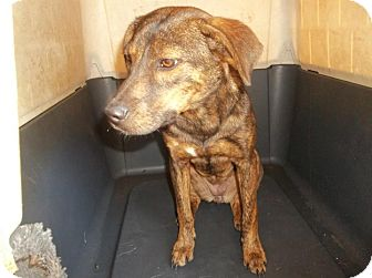 Labrador Retriever Mix Puppy for adoption in Henderson, North Carolina - Yara