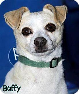 Chihuahua Mix Dog for adoption in Vista, California - Buffy