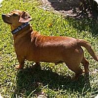 Adopt A Pet :: Dodge - Kingwood, TX