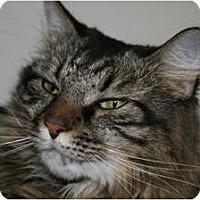 Adopt A Pet :: Fran - Frederick, MD