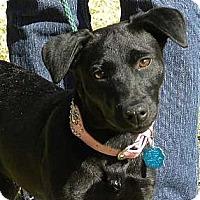 Adopt A Pet :: Sydney - Kingwood, TX