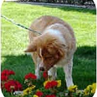 Adopt A Pet :: Reno - Mesa, AZ