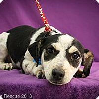 Adopt A Pet :: Tracks - Broomfield, CO