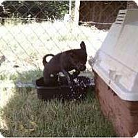 Adopt A Pet :: Ms. Slick - Jackson, TN