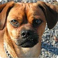Adopt A Pet :: Max - Rigaud, QC