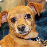 Adopt A Pet :: Chanel - Inglewood, CA