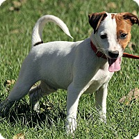 Adopt A Pet :: Leland - Brattleboro, VT