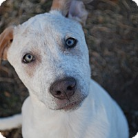 Adopt A Pet :: Stetson - Parker, CO