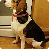 Adopt A Pet :: Luma - Daleville, AL