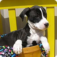 Adopt A Pet :: Cooney - South Dennis, MA
