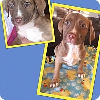 Adopt A Pet :: Delaware - Scottsdale, AZ