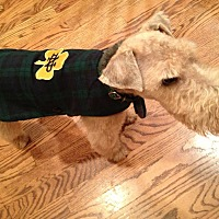 Lakeland Terrier Dog for adoption in Rosemont, Pennsylvania - Cooper