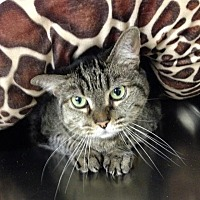 Adopt A Pet :: 17-231 C.J. - Aberdeen, WA