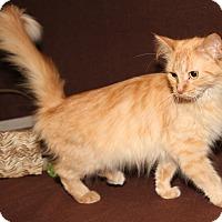 Adopt A Pet :: Rapunzel - Marietta, OH