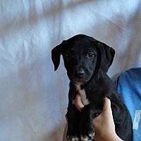 Adopt A Pet :: Zah - Oviedo, FL
