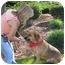 Photo 2 - Bloodhound/German Shepherd Dog Mix Dog for adoption in San Diego, California - Tex