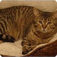 Adopt A Pet :: Keanu--PETSMART - Muncie, IN