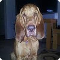 Adopt A Pet :: Beauford - Georgetown, KY