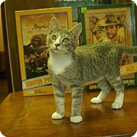 Adopt A Pet :: Imp - Ocala, FL