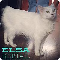 Adopt A Pet :: Elsa - Raleigh, NC