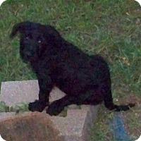 Adopt A Pet :: Bailey PENDING! - moscow mills, MO