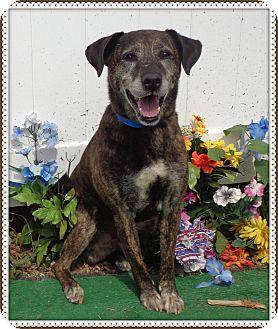 Labrador Retriever Mix Dog for adoption in Marietta, Georgia - FLICK (R)