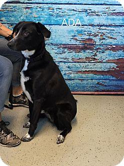 Labrador Retriever Mix Dog for adoption in Hibbing, Minnesota - Aida