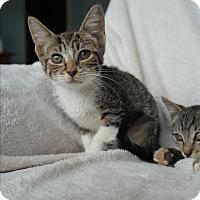 Adopt A Pet :: Sunny - Lakeland, FL