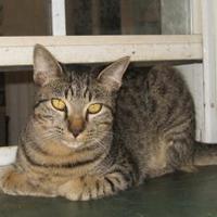Adopt A Pet :: Benny 05-09-13 - Bulverde, TX