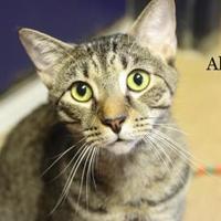 Adopt A Pet :: Albert - Cumming, GA