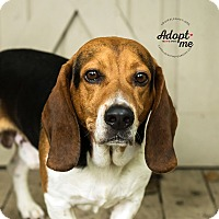 Adopt A Pet :: Huck - Cincinnati, OH