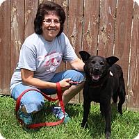 Adopt A Pet :: Happy - Elyria, OH