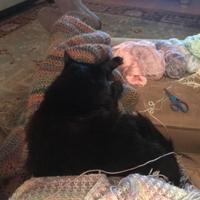Adopt A Pet :: * MISSY - Camarillo, CA