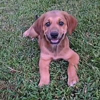 Adopt A Pet :: Filip - Ashburn, VA