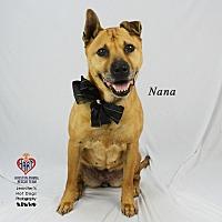 Adopt A Pet :: Nana - Tomball, TX