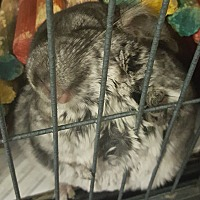 Adopt A Pet :: Skippy - NJ - Granby, CT