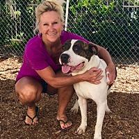 Adopt A Pet :: HOMER - San Juan Capistrano, CA